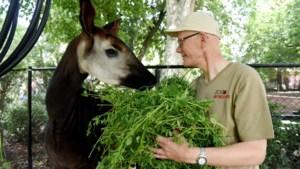 """Ronny is al 45 jaar aan de slag in de Zoo als verzorger: """"Zonder passie is dit een loodzware job"""""""