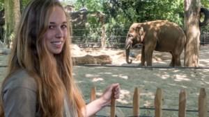 """Yenthe is kersvers olifantenverzorger van de Zoo: """"Elk weekend kwam ik naar hier met mijn grootmoeder"""""""