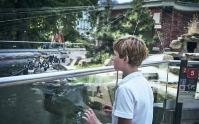 """Henri (11) kent elk dier in de dierentuin: """"Al mijn hele leven abonnee bij de Zoo"""""""