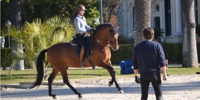 Barokke paarden verzamelen in Hippisch Centrum