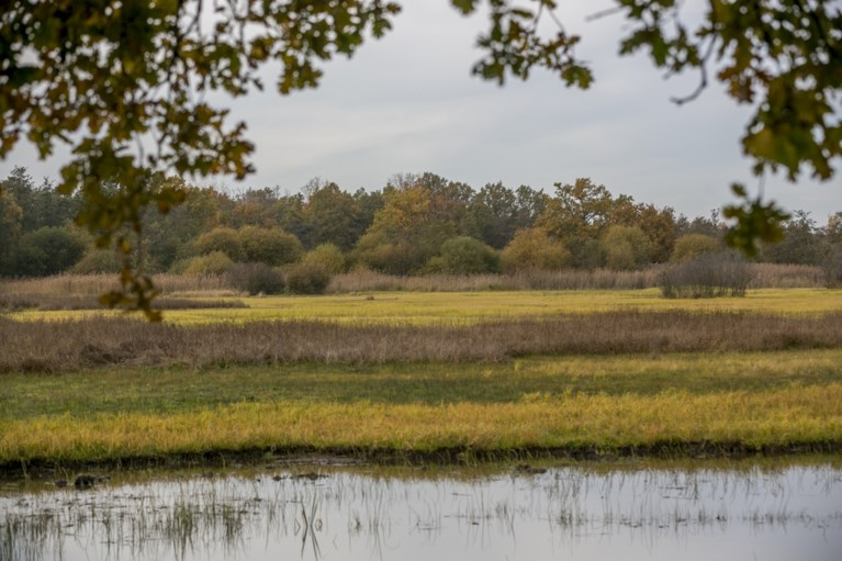 Antwerpse Zoo onderzoekt uitbreidingsmogelijkheden van eigen Kempens natuurgebied