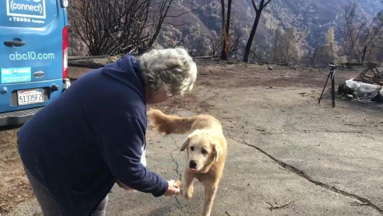 Hond bewaakt wekenlang afgebrande huis van baasje, dit is het moment waarop ze elkaar terugzien