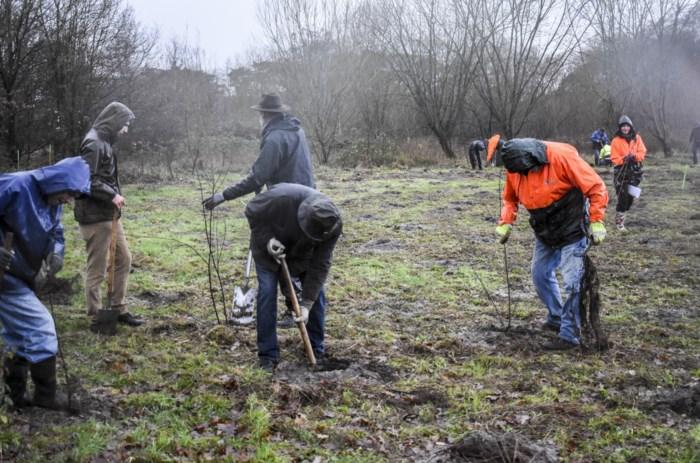 Bosgroepen planten 1,9 hectare nieuw bos