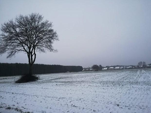 Dun laagje sneeuw in Kempen en Limburg