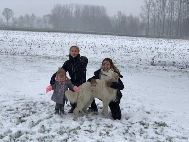 In Limburg gestolen hond drie weken later aangetroffen in Putte na huiszoeking