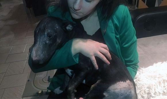 """Strooizout doodt hond: """"Een heel klein beetje is al genoeg om viervoeters te doden"""""""