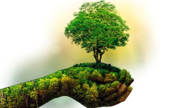 Tien vragen over het klimaat: hoe belastend is vliegen voor het milieu? Danken we de hete zomer aan het klimaat? Wat kan jij doen?
