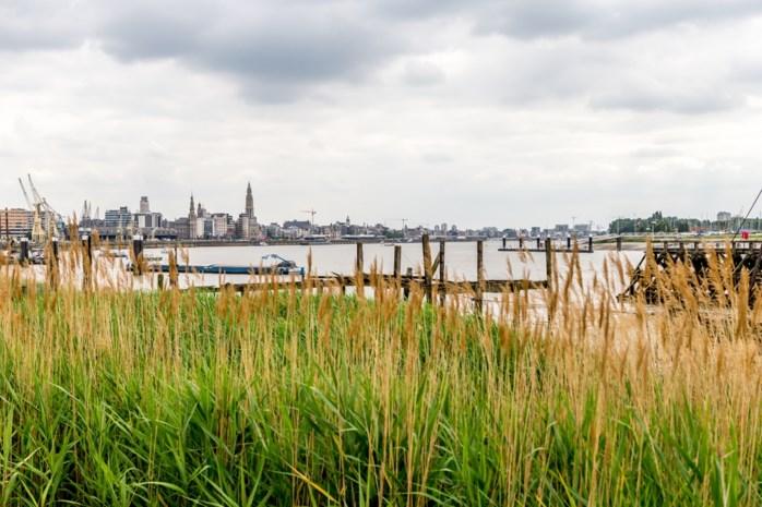 """Minder budget voor bescherming tegen overstromingen Schelde: """"Ze beknibbelen op grootste klimaatproject van Vlaanderen"""""""