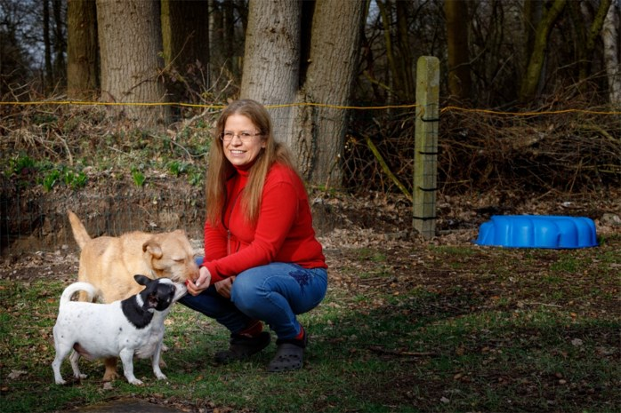 """Hond Tisha vermist na inbraak: """"Het ergste wat mij als dierenoppas kan overkomen"""""""