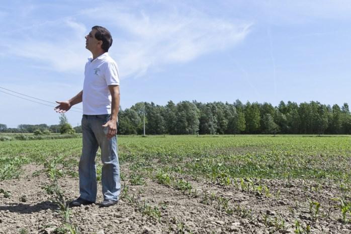 Boeren krijgen hulp uit de ruimte: meer maïs en aardappelen dankzij satellietbeelden