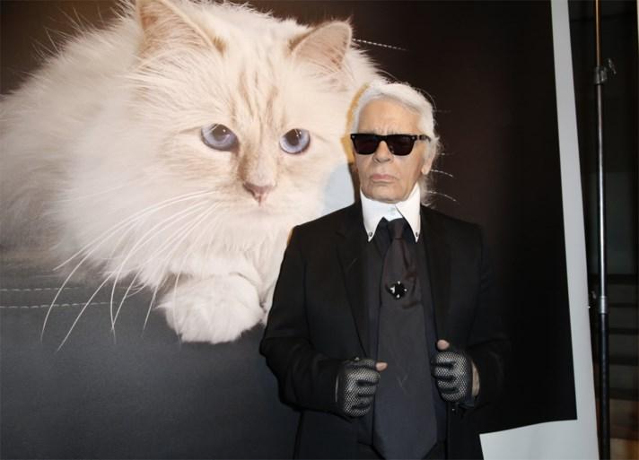 Lagerfeld zijn meest begeerde muze: Choupette