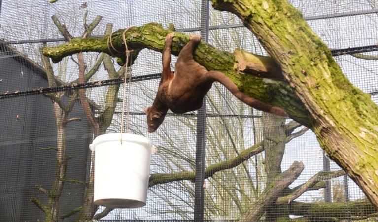 Dieren Olmense Zoo amuseren zich met nieuwe speeltjes