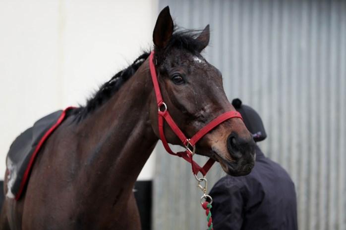 Twintigtal paarden en verboden hormonen in beslag genomen tijdens huiszoekingen