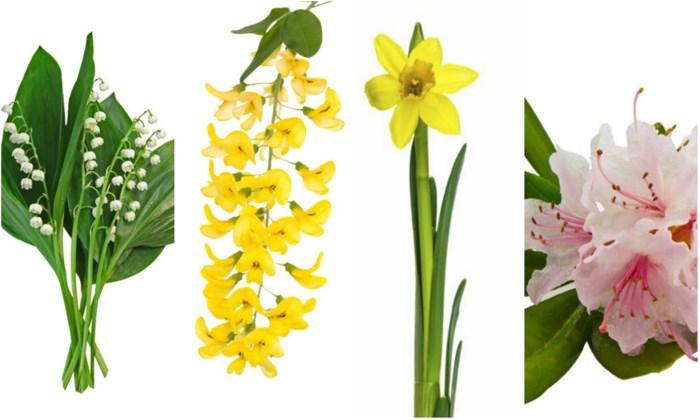 De plantjes in uw tuin of woonkamer zijn giftiger dan u denkt: niet alleen met de wonderboom is het oppassen