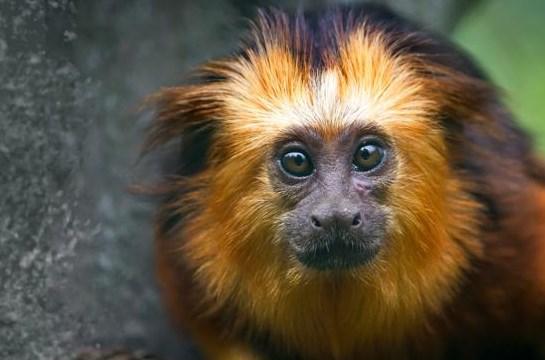 Antwerpse Zoo en VITO springen mee in de bres voor het klimaat