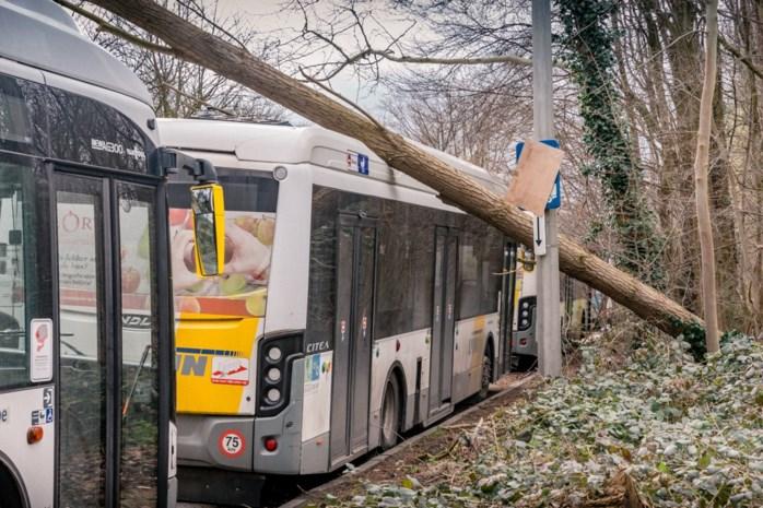 Na de storm: De Lijn verwacht vanochtend normaal bus- en tramverkeer, wel nog wat hinder op spoor