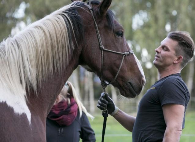 """""""Mensen moeten dringend leren  hun paard meer paard te laten zijn"""""""