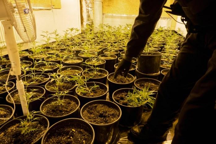 Politie treft wietplantage aan in Boom