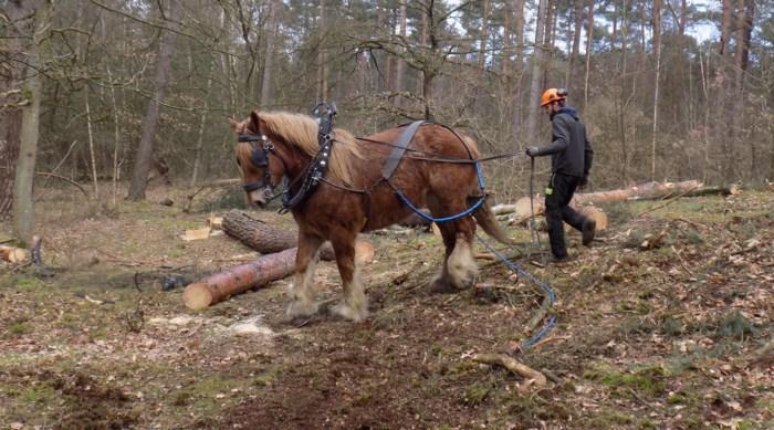 Trekpaarden maken eeuwenoude grafheuvel Partisaensberg opnieuw zichtbaar