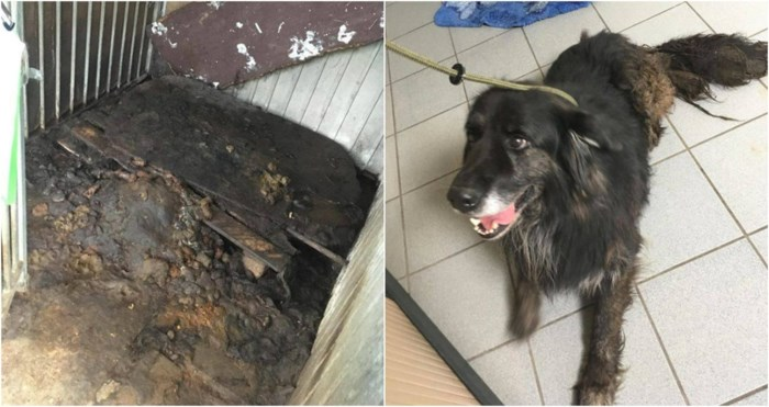 Hond leeft op dertig centimeter uitwerpselen in krap hokje