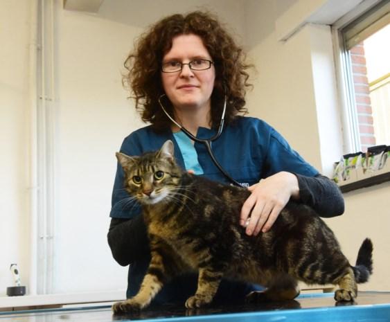Dierenarts waarschuwt voor leukemie bij katten