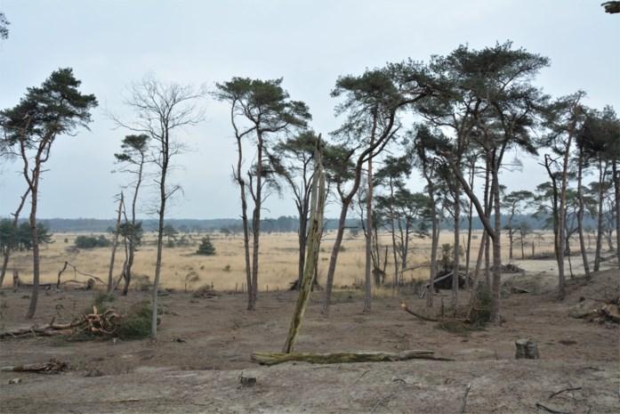 Brandfase rood in Antwerpse brandgevoelige gebieden: extreem hoog gevaar
