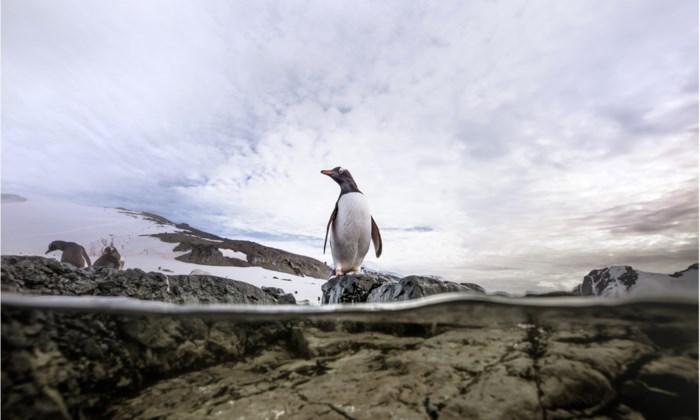 Onze Netflix bingetip. Unieke documentaire 'Our Planet', veel mooier wordt slecht nieuws niet
