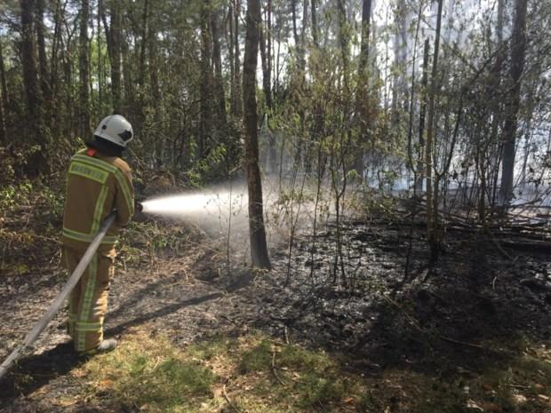 Ruim 2.500 vierkante meter bos vernield door brand