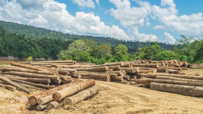 Een van de slechtste jaren ooit: in 2018 liefst 12 miljoen hectare bos verdwenen