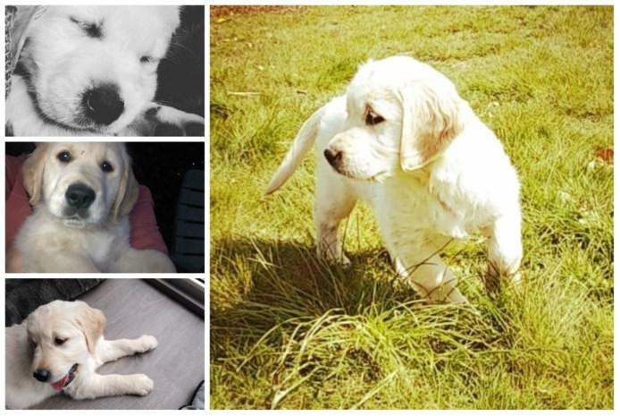 Elke dag wordt er een hond gestolen in ons land: om door te verkopen, of om als fokteef in te zetten