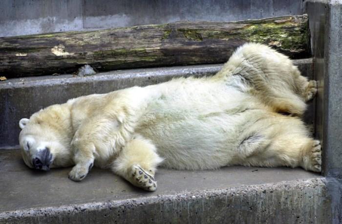 Neusberen en wasberen verdwijnen uit Olmense Zoo