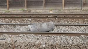 Treinverkeer tussen Lokeren en Sint-Niklaas blijft nog dagenlang onderbroken: 5.885 dwarsliggers beschadigd