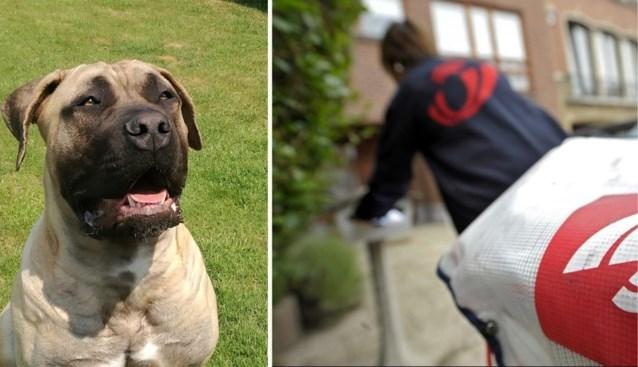 Elke week wordt minstens één postbode gebeten door een hond (en dat kost Bpost veel geld)