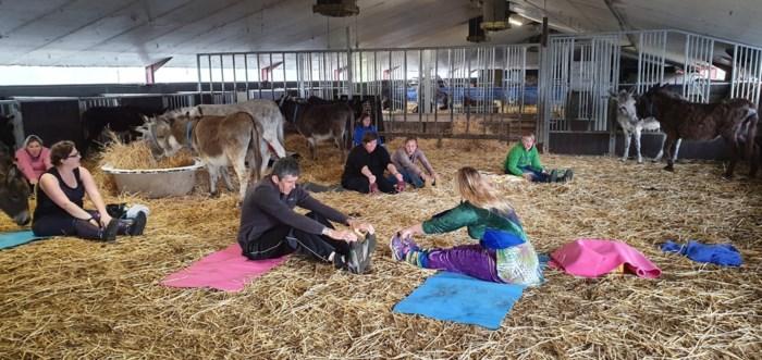Stretchen tussen de ezels: in de wei bij goed weer, in de stal bij slecht weer