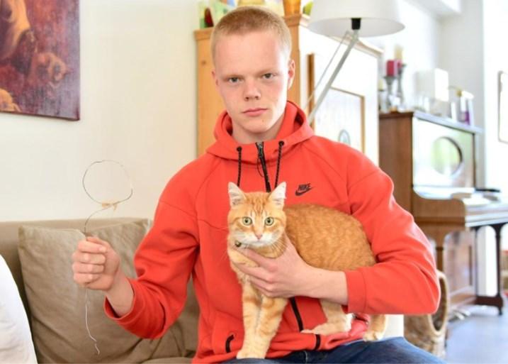 """Vermiste kater komt thuis met strop rond nek: """"Wat met Ollie gebeurd is, mag geen enkel ander dier overkomen"""""""