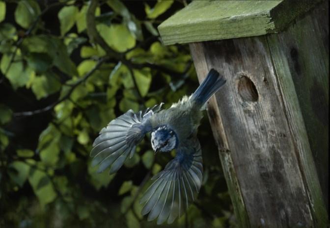 Broedend vogeltje sterft door verkiezingsfolder