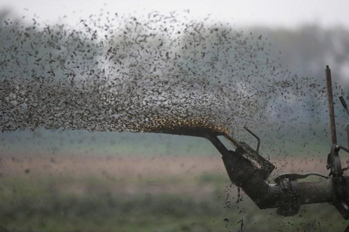 """Strenger mestactieplan moet fraude bestrijden, maar """"zolang veestapel zo groot blijft, zal waterkwaliteit niet beteren"""""""