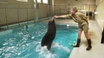 DISCUSSIE. Wat met de toekomst van de Antwerpse Zoo?