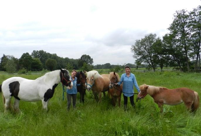 Zussen bieden therapie en vorming met boerderijdieren