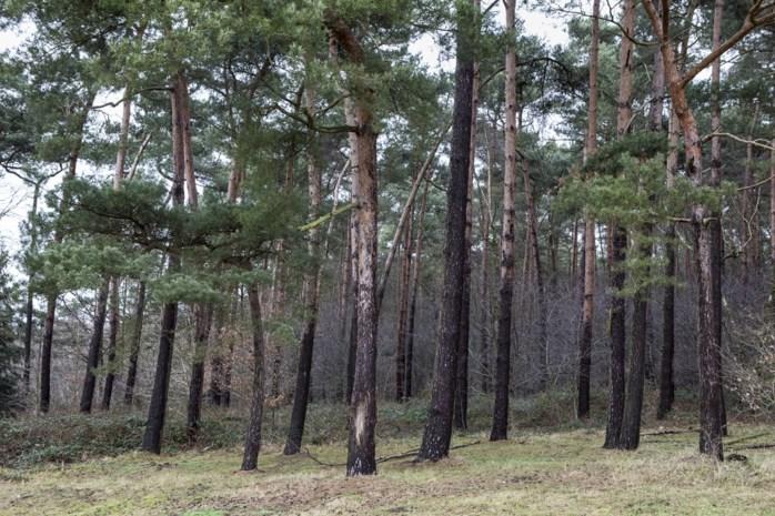 Gemeente verkoopt partij hout van omgewaaide bomen