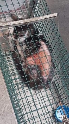 Onbekende dumpt gewonde kat in bench aan Antwerpse discotheek