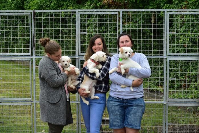 """Mechelen zet 55-plussers in als 'plusbaasjes': """"Met dieren omgaan is goed voor de gezondheid"""""""