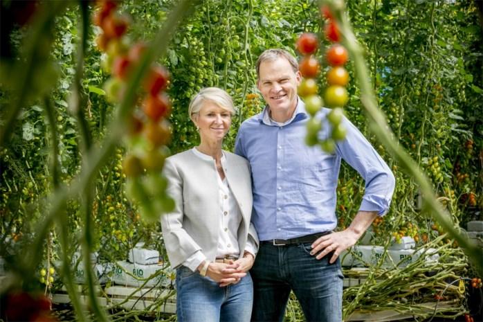 Stoffels kweekt groenten voor sterrenchefs in Rijkevorsel