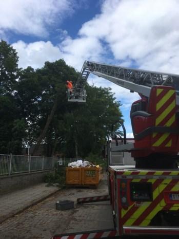 Brandweer haalt gevaarlijke boom weg