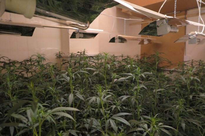 """Man staat terecht voor cannabisplantage met 609 plantjes, maar ontkent alles: """"Mijn woning was verhuurd aan iemand anders"""""""