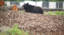D-Day voor Belgische dierentuinen: Pairi Daiza en Olmense Zoo staan voor groot feestweekend