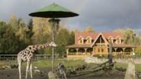 Olmense Zoo wordt zaterdag feestelijk omgedoopt tot Pakawi Park