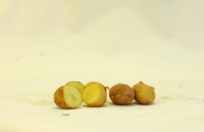Krieltjes ontmaskerd als stukjes van grote aardappelen