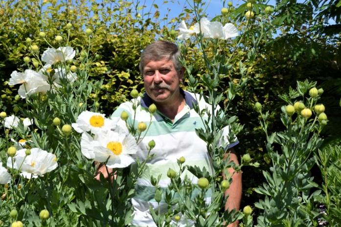 """Coördinator arboretum Johan (65) met pensioen: """"Na jaren mijn eigen slaapboom kunnen ontwikkelen"""""""