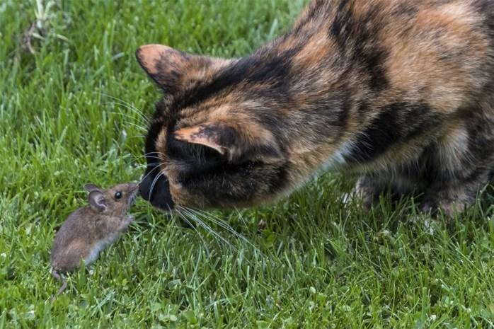Tom en Jerry in Kapellen: schattig tafereel in tuin